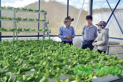 Khuyến khích, hỗ trợ nông dân phát triển nông nghiệp ứng dụng công nghệ cao